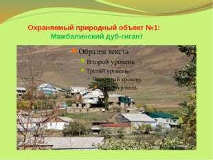 Охраняемый природный объект №1: Мажбалинский дуб-гигант