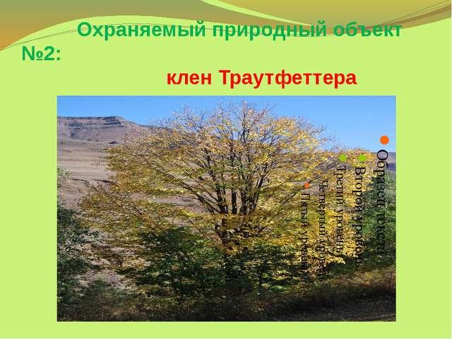 Охраняемый природный объект №2: клен Траутфеттера