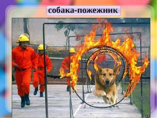 собака-пожежник