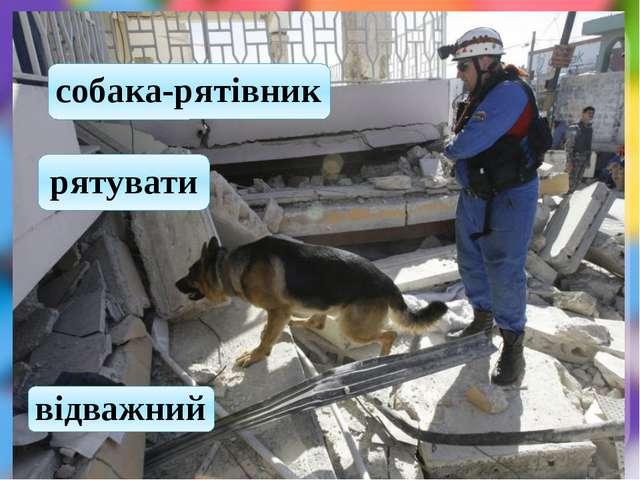 собака-рятівник рятувати відважний