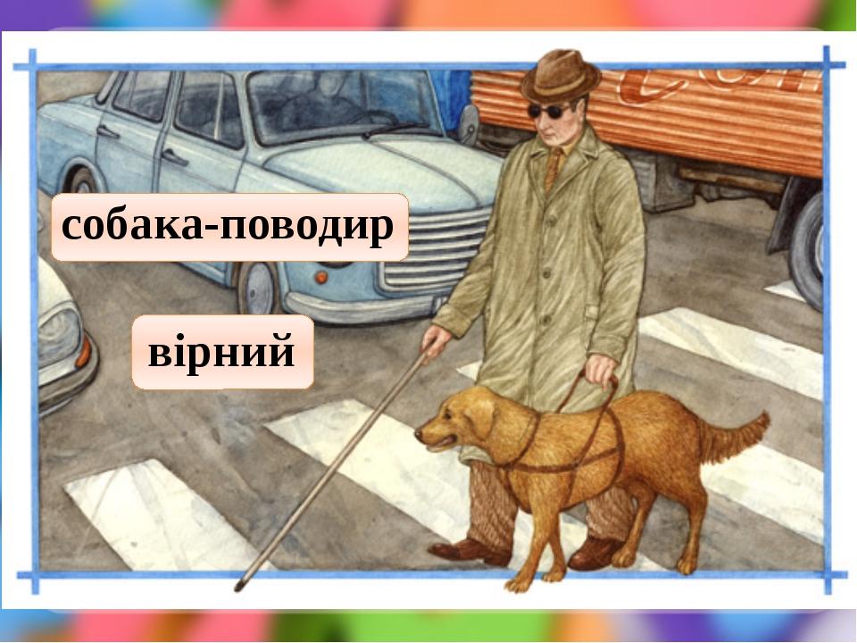 собака-поводир вірний