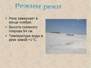 Река замерзает в конце ноября. Высота снежного покрова 54 см. Температура вод