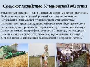 Сельское хозяйство Ульяновской области Ульяновская область— один из важных а