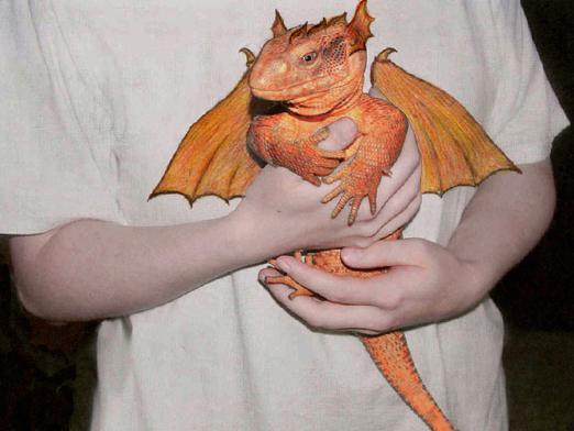 Как сделать себе настоящего дракона 329
