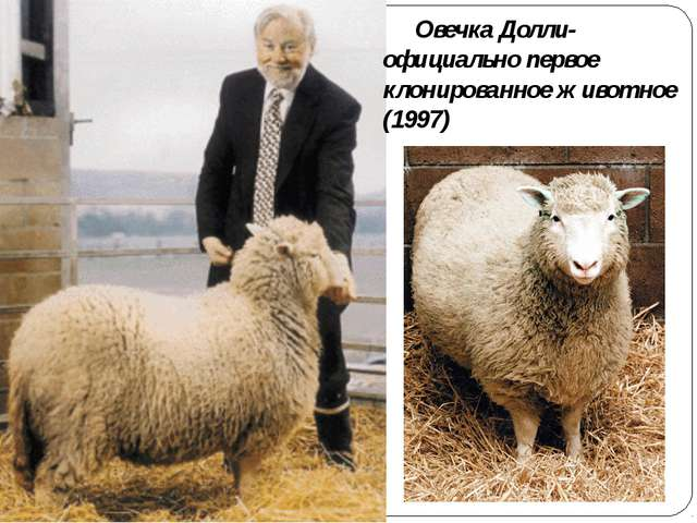 Овечка Долли- официально первое клонированное животное (1997)