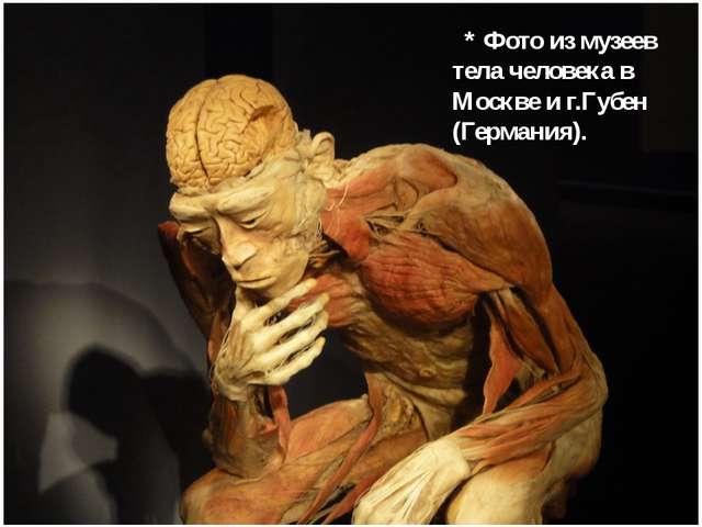 * Фото из музеев тела человека в Москве и г.Губен (Германия).