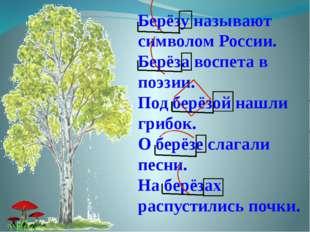 Берёзу называют символом России. Берёза воспета в поэзии. Под берёзой нашли г