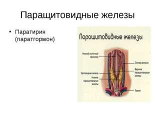 Паращитовидные железы Паратирин (паратгормон)