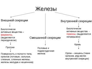 Железы Внешней секреции Смешанной секреции Внутренней секреции Биологически а