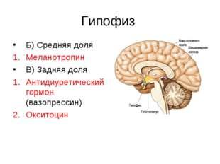 Гипофиз Б) Средняя доля Меланотропин В) Задняя доля Антидиуретический гормон