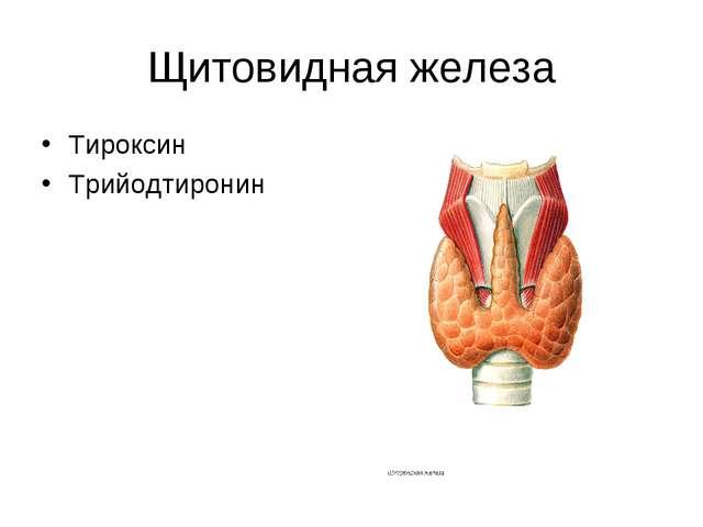 Щитовидная железа Тироксин Трийодтиронин