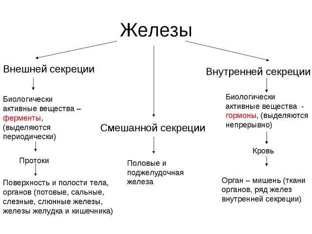 Железы Внешней секреции Смешанной секреции Внутренней секреции Биологически а...