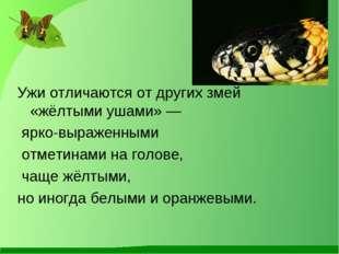 Ужи отличаются от других змей «жёлтыми ушами» — ярко-выраженными отметинами