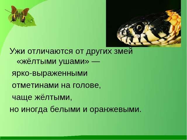 Ужи отличаются от других змей «жёлтыми ушами» — ярко-выраженными отметинами...