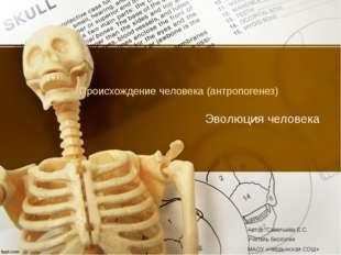 Происхождение человека (антропогенез) Эволюция человека Автор: Савельева Е.С.