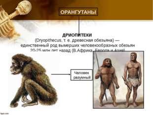ДРИОПИТЕКИ (Dryopithecus, т. е. древесная обезьяна) — единственный род вымерш
