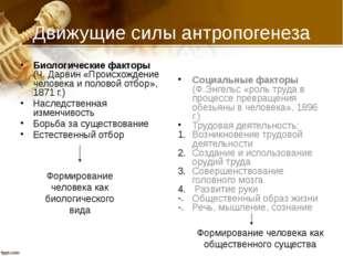 Движущие силы антропогенеза Биологические факторы (Ч. Дарвин «Происхождение ч