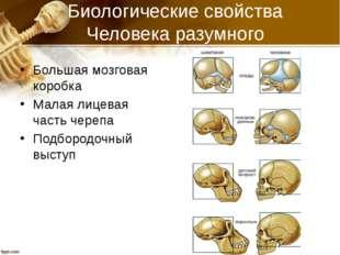 Биологические свойства Человека разумного Большая мозговая коробка Малая лице