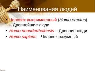 Наименования людей Человек выпрямленный (Homo erectus) – Древнейшие люди Homo