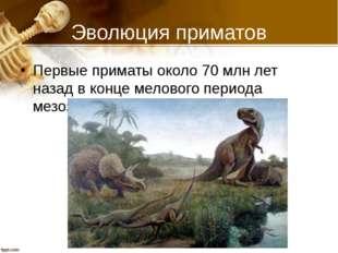 Эволюция приматов Первые приматы около 70 млн лет назад в конце мелового пери