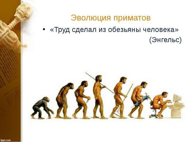 Эволюция приматов «Труд сделал из обезьяны человека» (Энгельс)