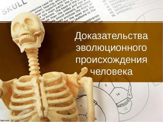 Доказательства эволюционного происхождения человека