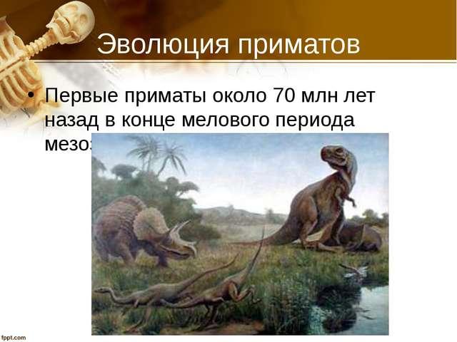 Эволюция приматов Первые приматы около 70 млн лет назад в конце мелового пери...