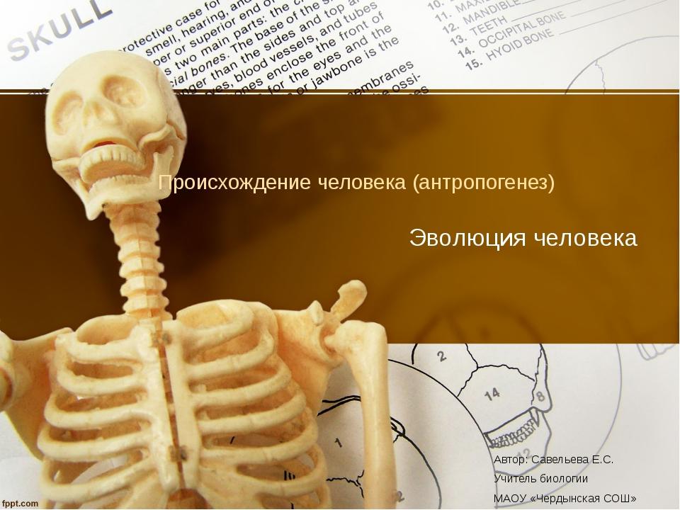 Происхождение человека (антропогенез) Эволюция человека Автор: Савельева Е.С....