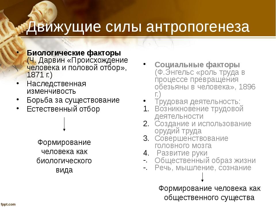 Движущие силы антропогенеза Биологические факторы (Ч. Дарвин «Происхождение ч...