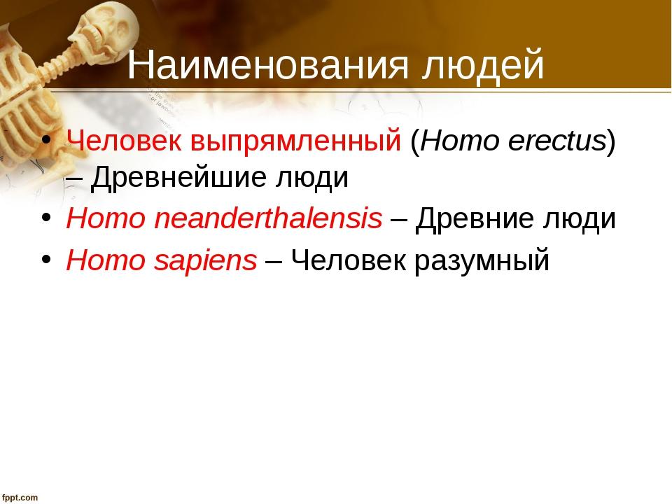 Наименования людей Человек выпрямленный (Homo erectus) – Древнейшие люди Homo...