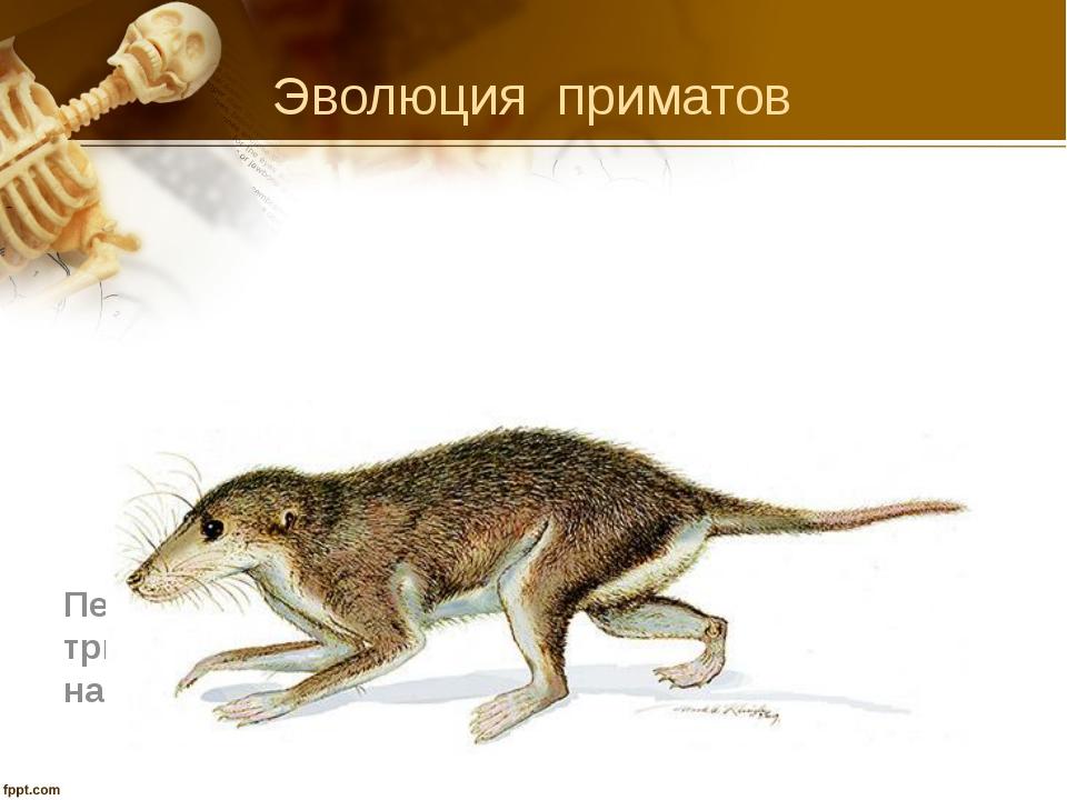 Эволюция приматов Первые млекопитающие (мезозойская эра, триасовый период (ко...
