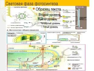 Световая фаза фотосинтеза