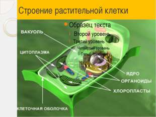 Строение растительной клетки