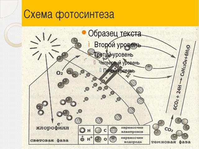 Схема фотосинтеза