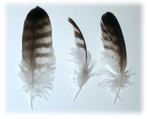 ПОЧЕМУ у птиц есть перья?