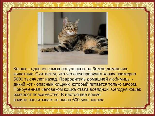 Кошка – одно изсамых популярных наЗемле домашних животных. Считается, что ч...