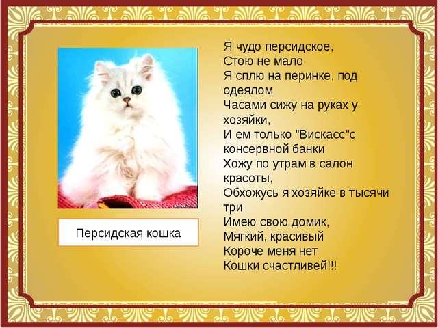 Персидская кошка Я чудо персидское, Стою не мало Я сплю на перинке, под одеял...