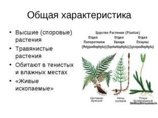 Общая характеристика Высшие (споровые) растения Травянистые растения Обитают