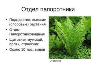 Отдел папоротники Подцарство: высшие (споровые) растения Отдел Папоротниковид