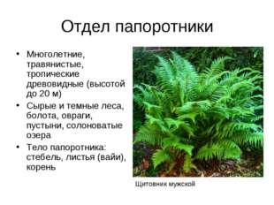 Отдел папоротники Многолетние, травянистые, тропические древовидные (высотой