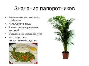 Значение папоротников Компоненты растительных сообществ Используют в пищу В к