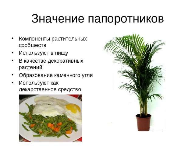 Значение папоротников Компоненты растительных сообществ Используют в пищу В к...