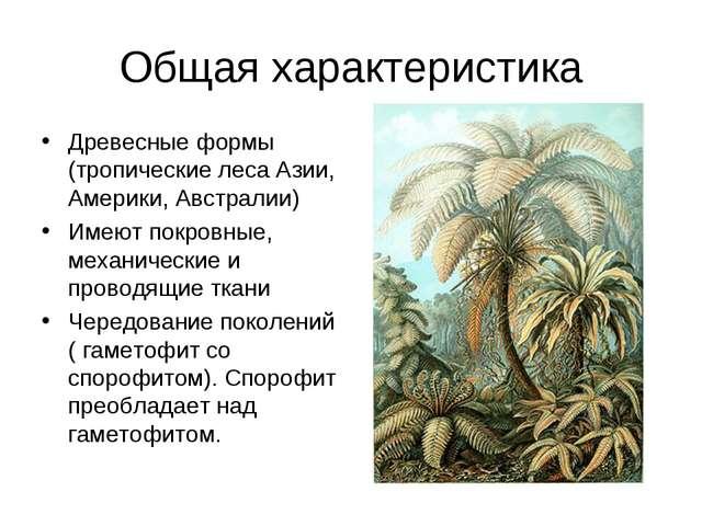 Общая характеристика Древесные формы (тропические леса Азии, Америки, Австрал...