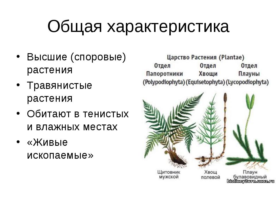 Общая характеристика Высшие (споровые) растения Травянистые растения Обитают...