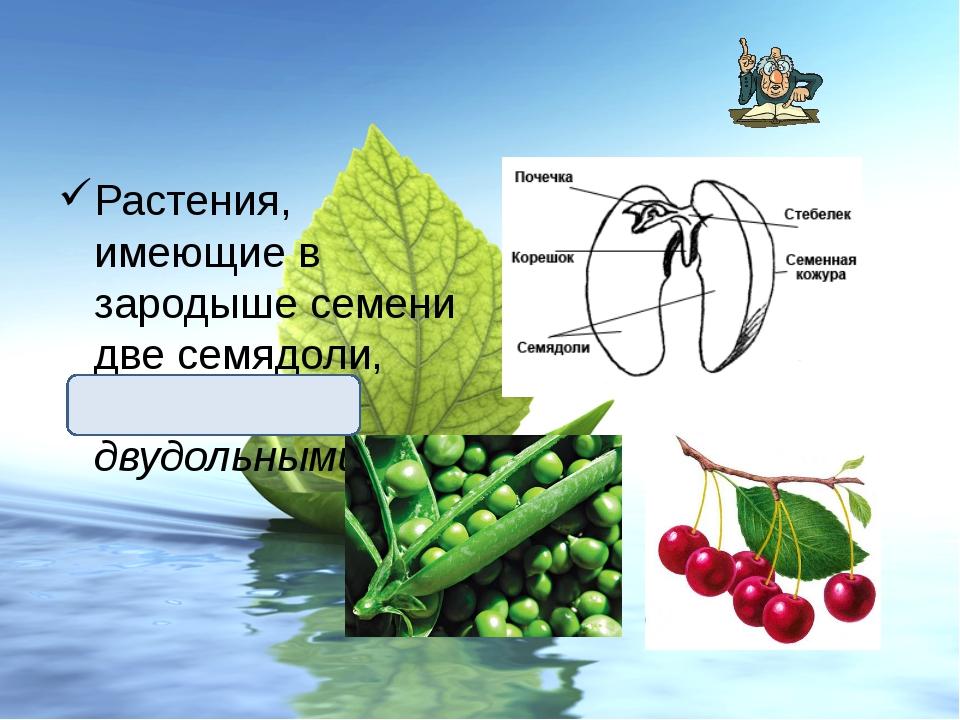 Растения, имеющие в зародыше семени две семядоли, называют двудольными.