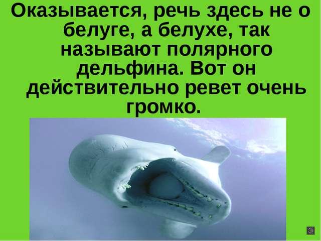 Оказывается, речь здесь не о белуге, а белухе, так называют полярного дельфин...