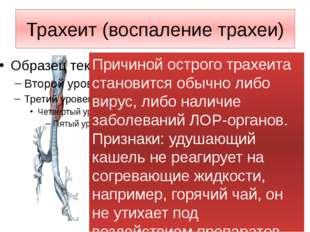 Трахеит (воспаление трахеи) Причиной острого трахеита становится обычно либо