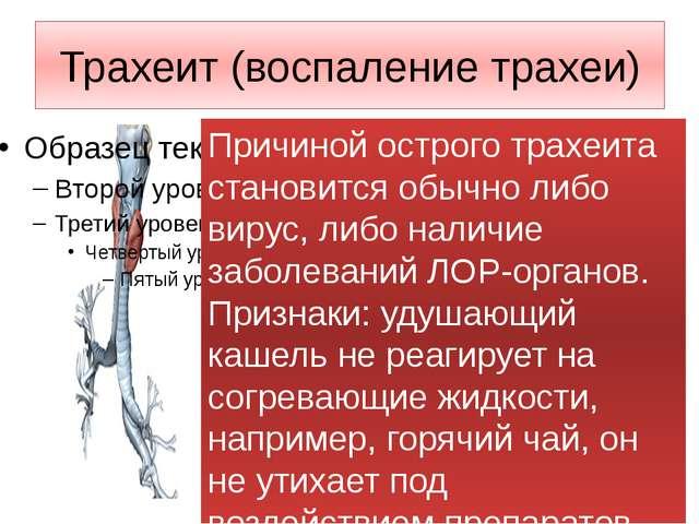 Трахеит (воспаление трахеи) Причиной острого трахеита становится обычно либо...