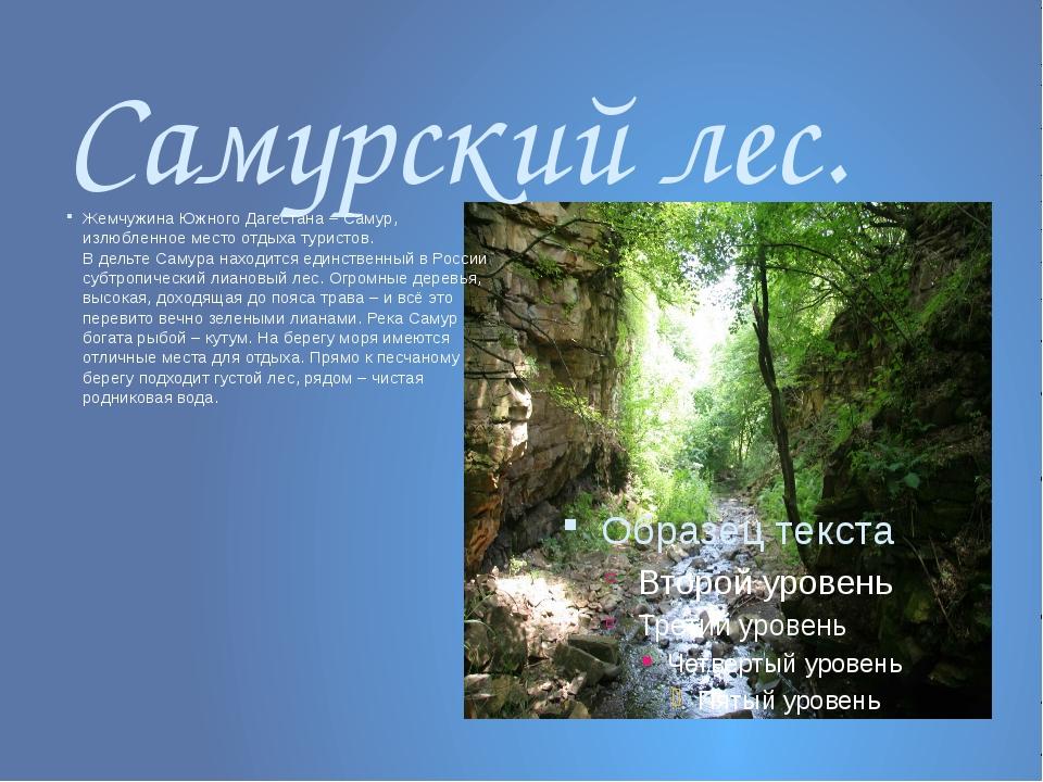 Самурский лес. Жемчужина Южного Дагестана – Самур, излюбленное место отдыха т...