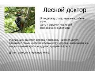 Лесной доктор Я по дереву стучу, червячка добыть хочу, Хоть и скрылся под кор